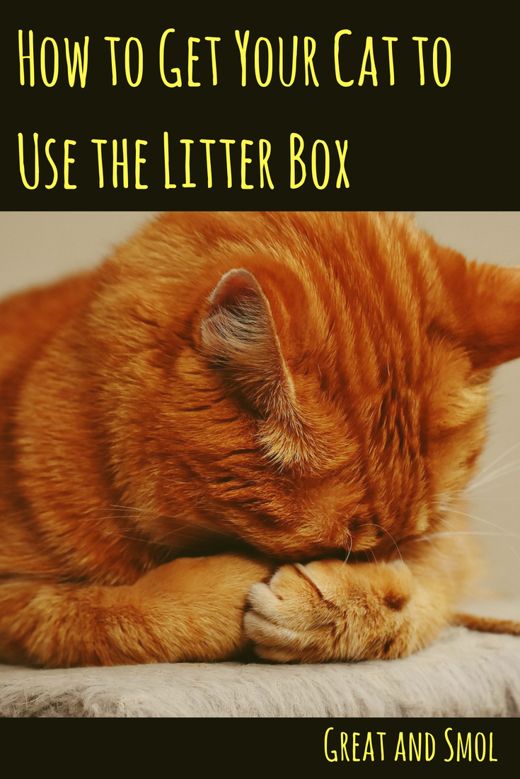 How To Get Your Cat To Use The Litter Box Raising Kittens Cats Orange Tabby Cats