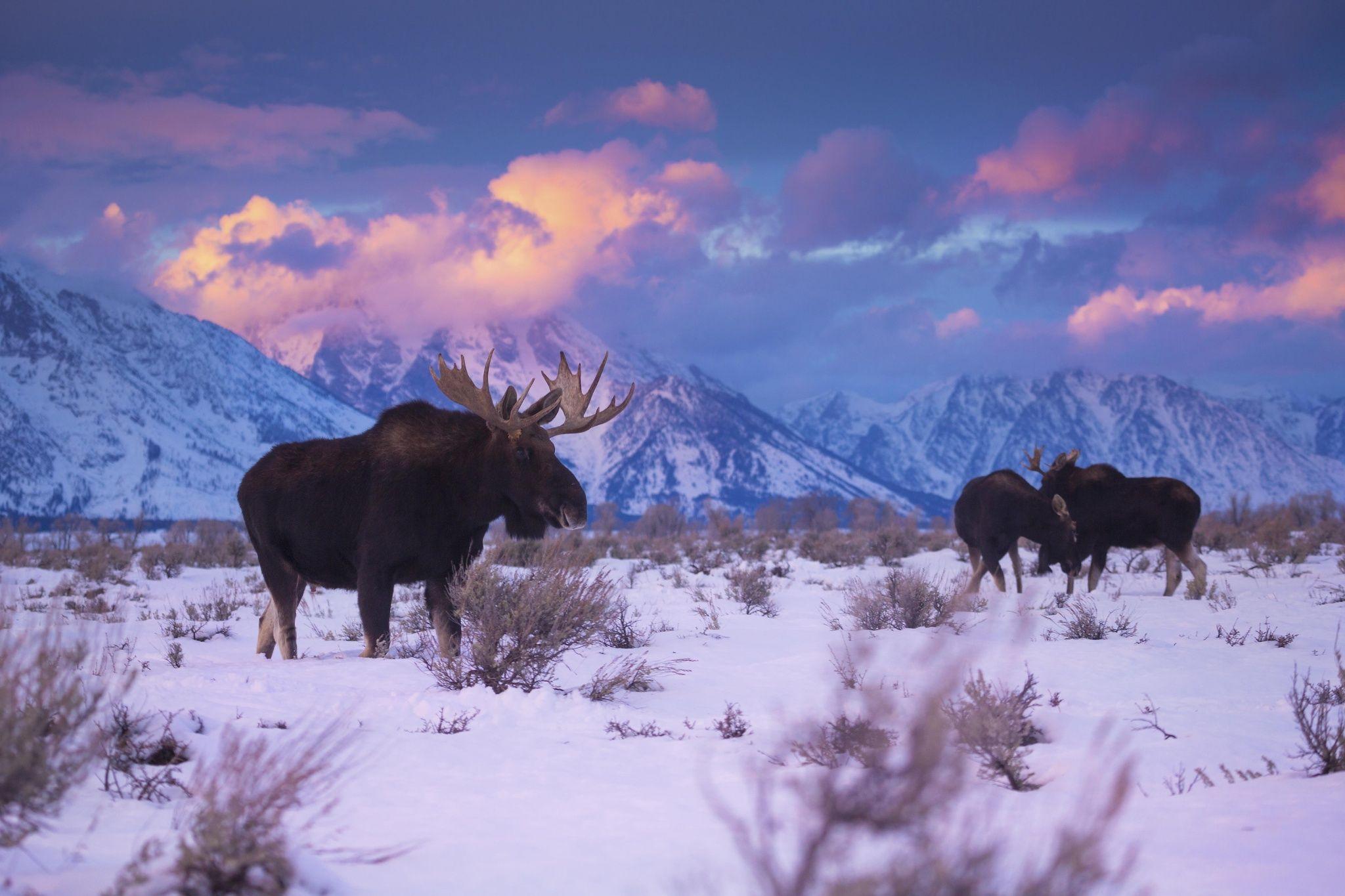Winter's Vibrance by Chase Dekker on 500px