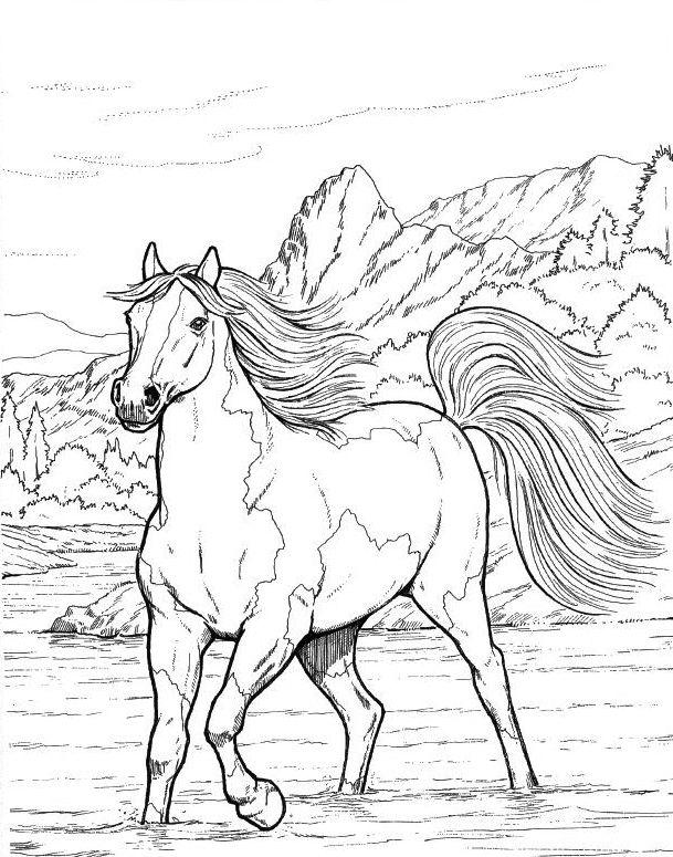 malvorlagen für pferde für erwachsene  beste malvorlagen