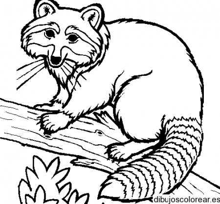 Dibujo de un mapache | Dibujos | Pinterest | Coloring pages, Color ...