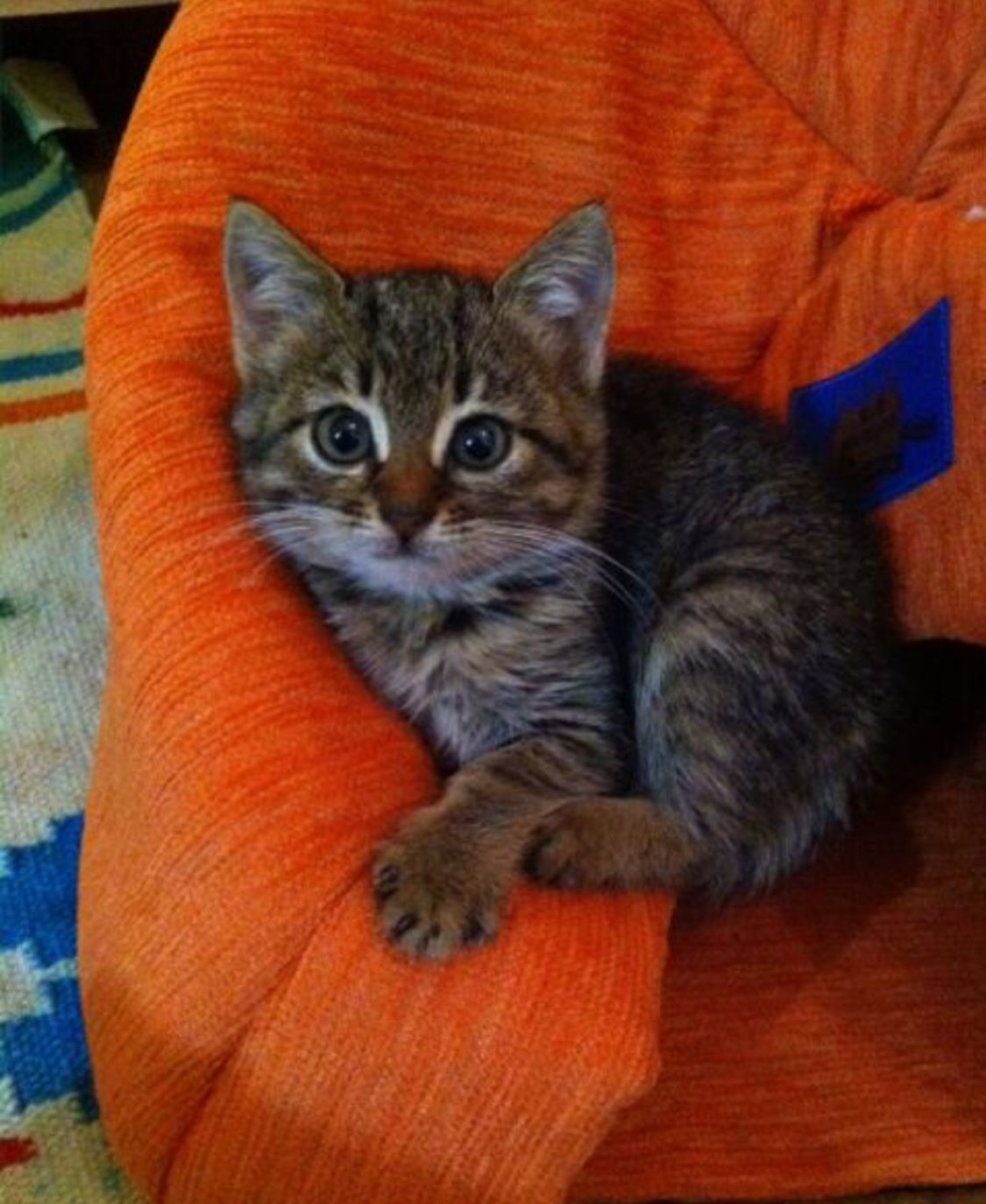 We Found Her In The Street And She Was Very Sick And Would Die Soon She Was 3 4 Weeks Old We Had Her Cured For A Long Time But Could Not S
