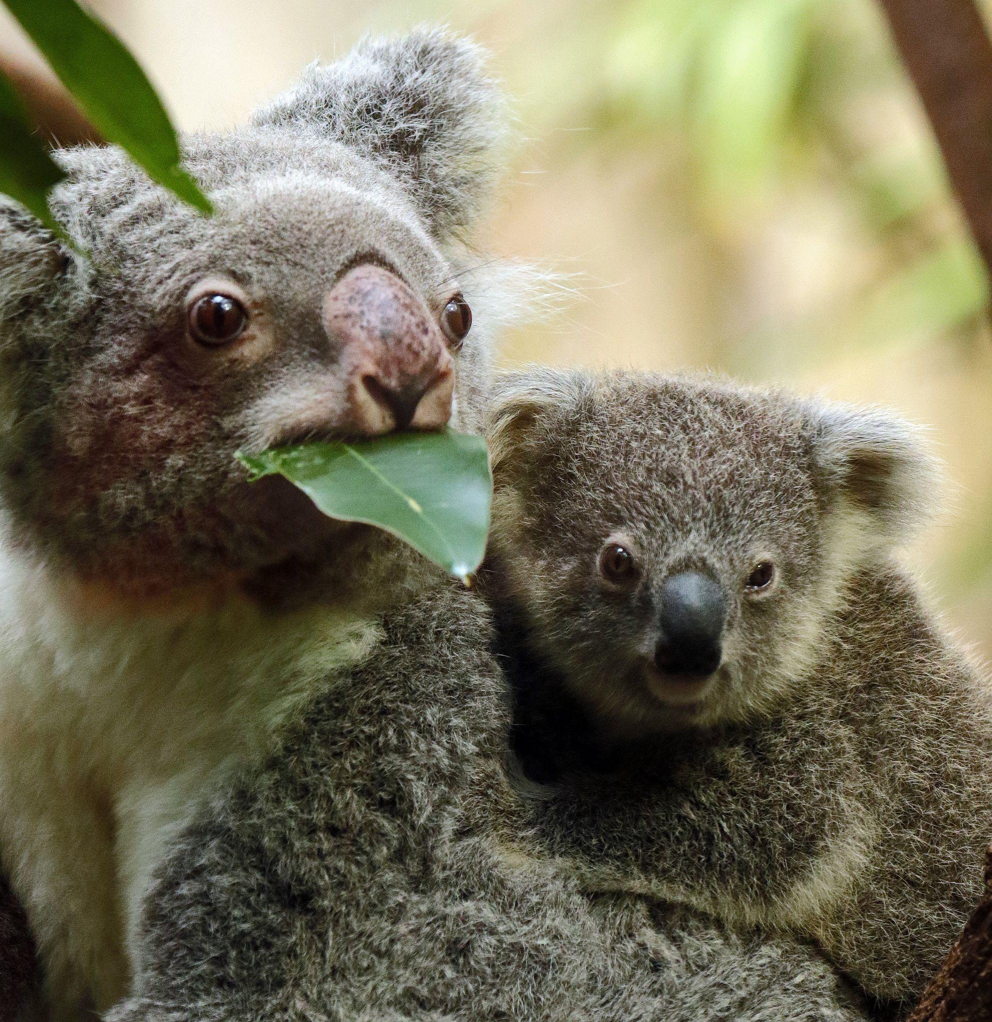 очень австралийские животные фото с названиями скорость характер очередной