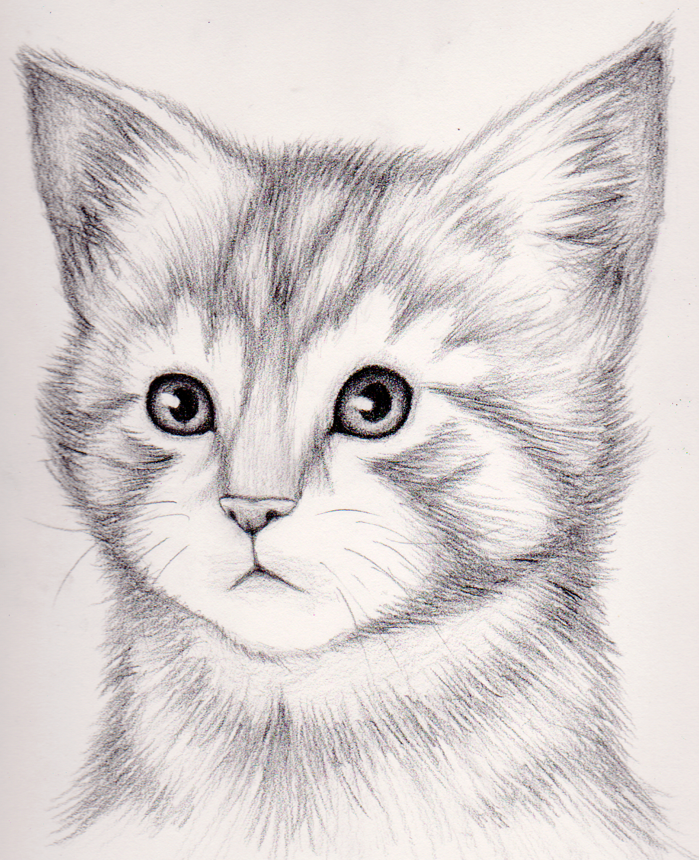 How To Draw A Realistic Kitten Draw Realistic Kitten Realistic Kitten Drawing Drawings Cat Portraits