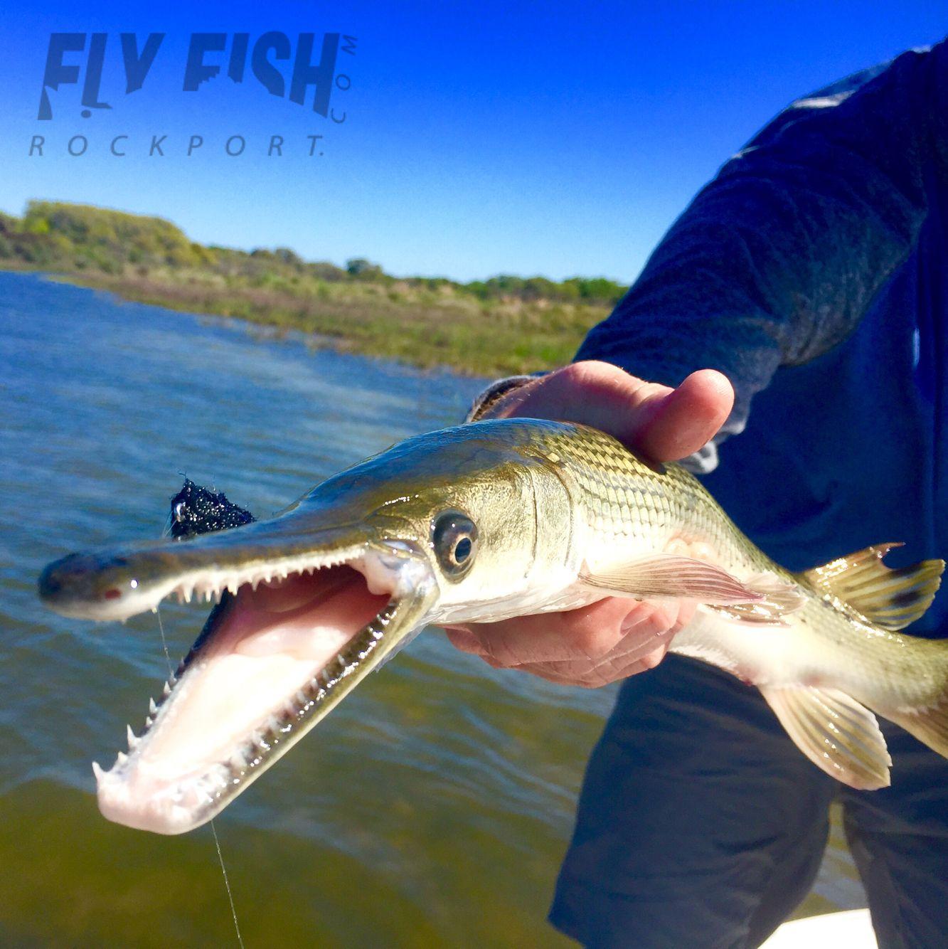 Gar on the fly rockport tx texas saltwater fishing for Texas coast fishing