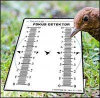 Traumflieger-Report: mehr Bildschärfe mit dem Fokus-Detektor