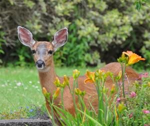 How To: Find out how to protect your garden from deer by planting deer resistant bulbs, using repellent and more! READ MORE...