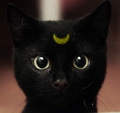 awww, its luna the cat from sailormoon.