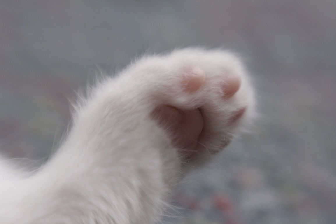 Pin By Crissy G On Pretty Paws Paw Kitten Paw Pads
