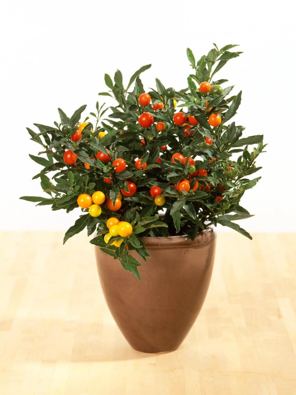Colorful Container Gardens Ideas for Winter and Fall | Patios ...