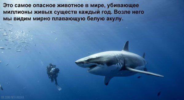 Новости | Животные, Акула, Юмор