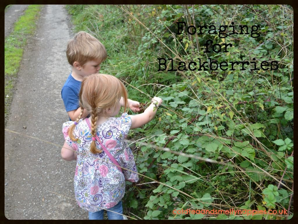 A Foraging Adventure Part Two (With images) Edible