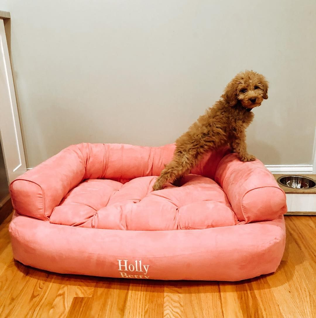 Best Snoozer Overstuffed Luxury Dog Sofa Microsuede Fabric 400 x 300