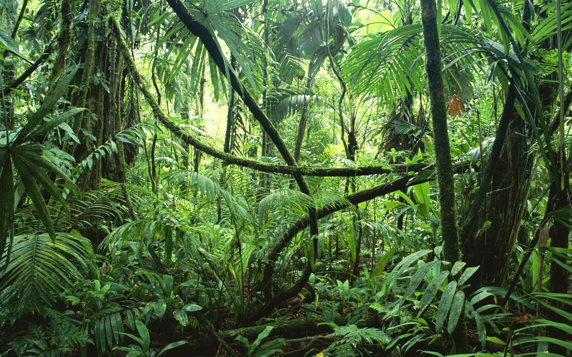 animals in the daintree rainforest forest floor