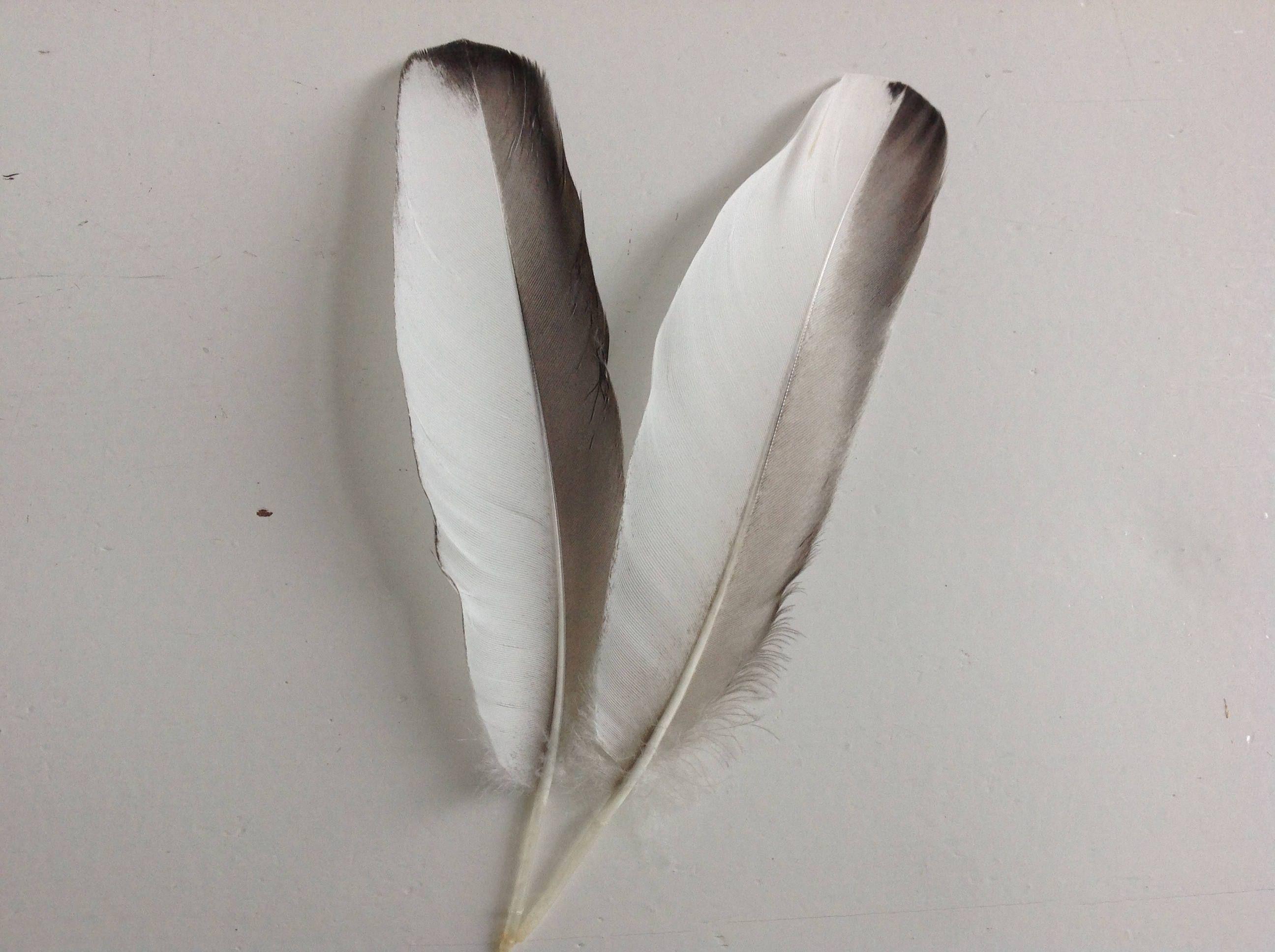 Zwart Witte Veren Veren Voor Decoratie Veren Voor Hoed Etsy Feather Beautiful