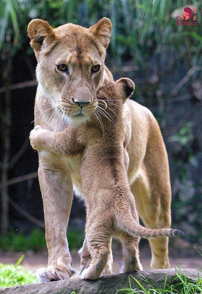 Mami...!!!