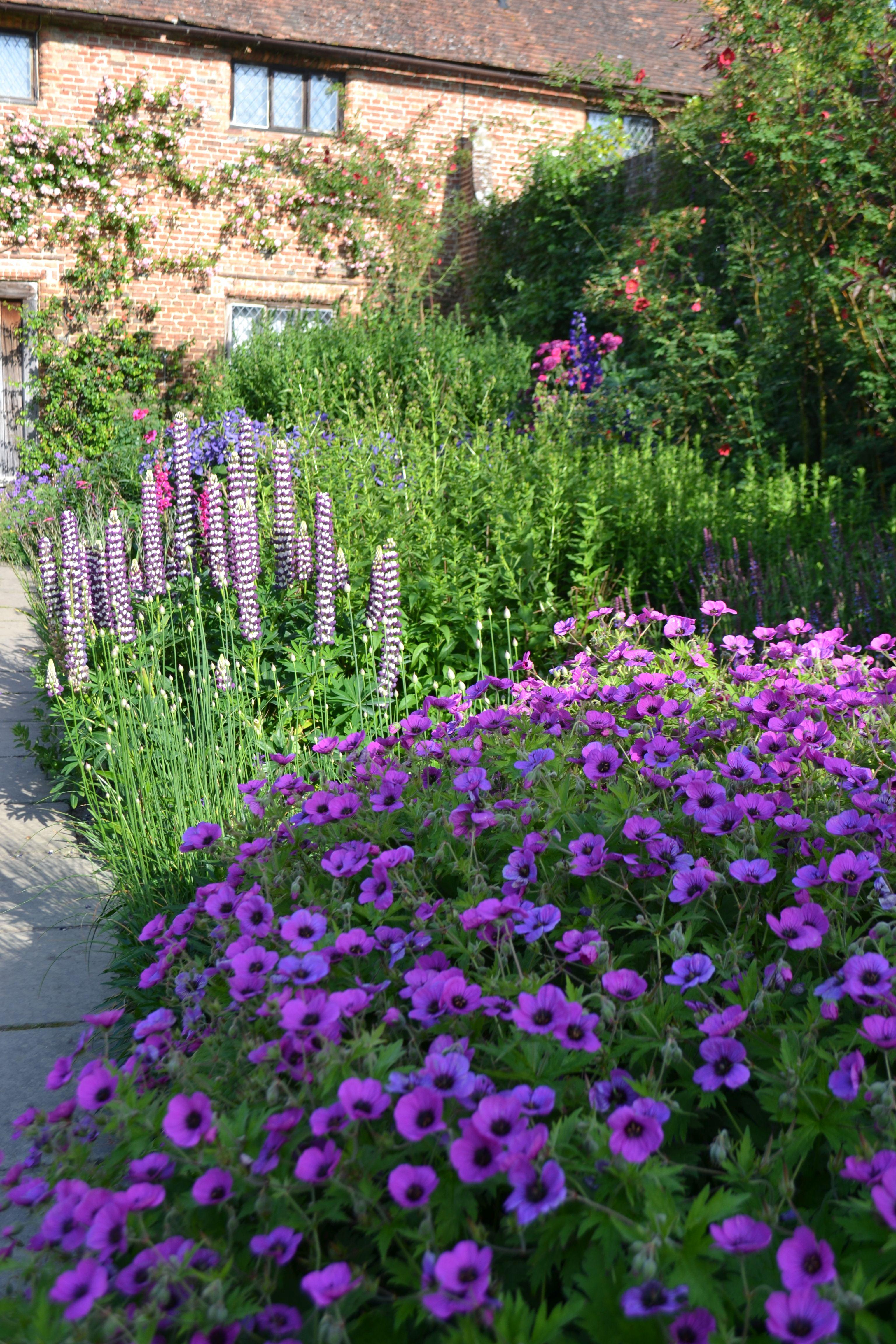 The Purple Border at Sissinghurst with Geranium