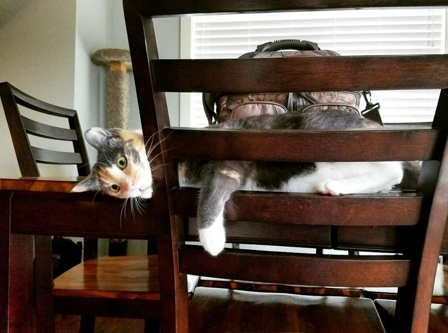 Don't mind me. Just gonna hang out here & slap everyone who walks by.   http://ift.tt/1TPR09s via /r/cats http://ift.tt/1TsKeXu  cats funny pictures