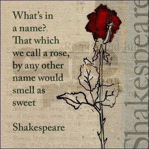 That Which We Call A Rose By Any Other Word Would Smell As Sweet William Shakespeare   Qoute