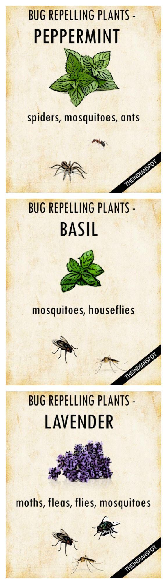 plants that keep bugs away u2026 pinteres u2026