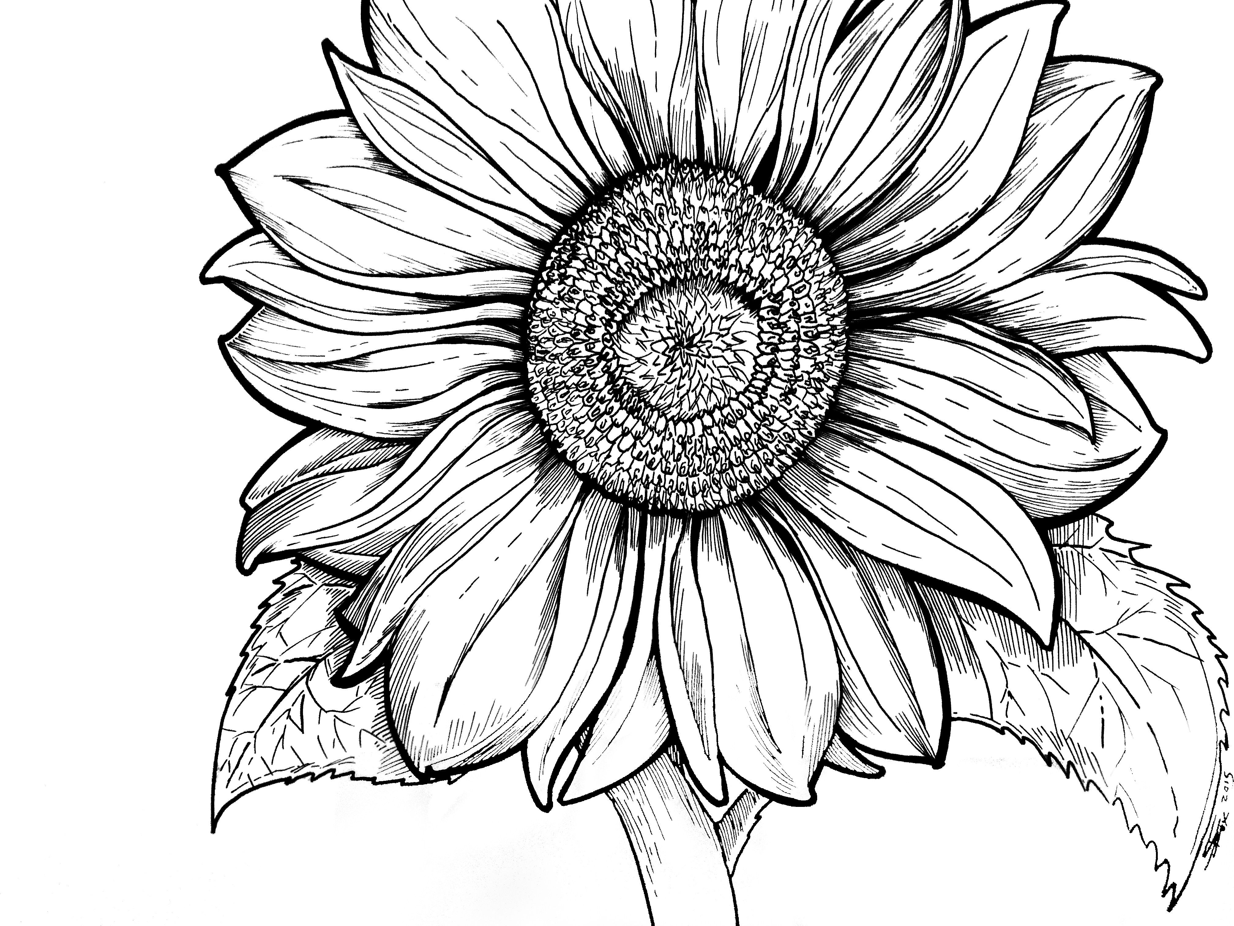 excellent sunflower coloring sheet page free printable