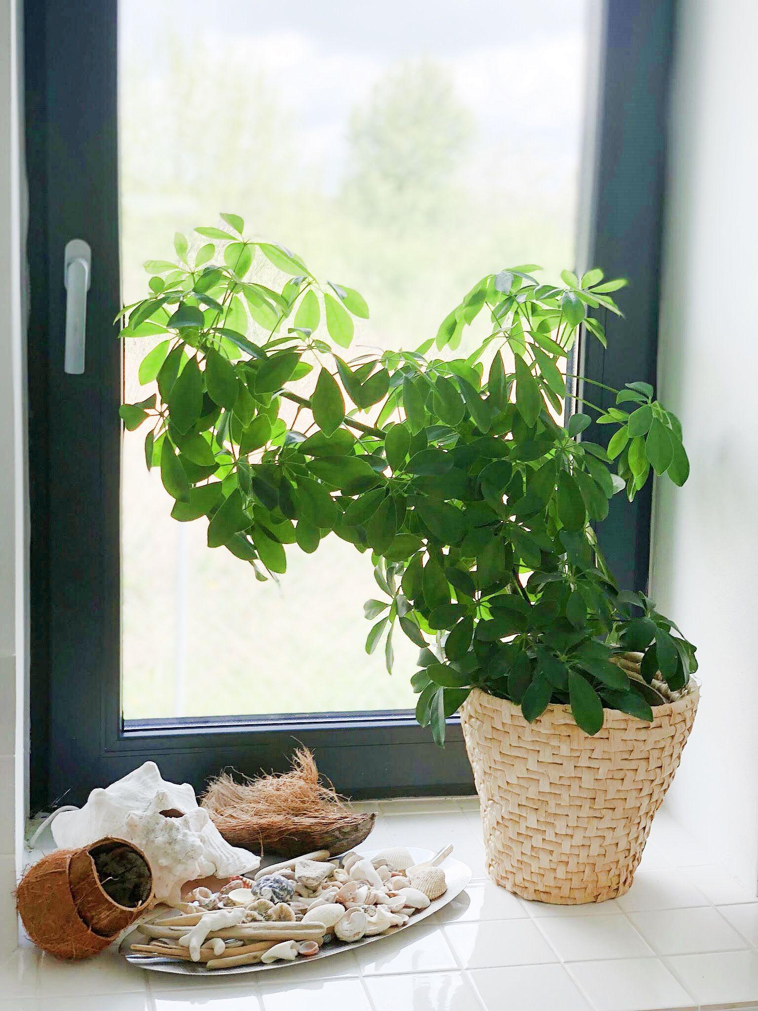 Kwiaty Doniczkowe W Moim Domu Cz 2 Basia Szmydt Blog Plants