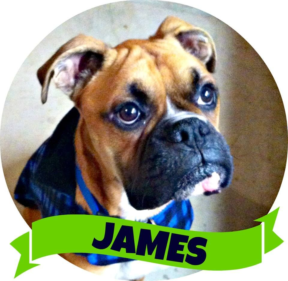 James has found his forever best friend! (With images