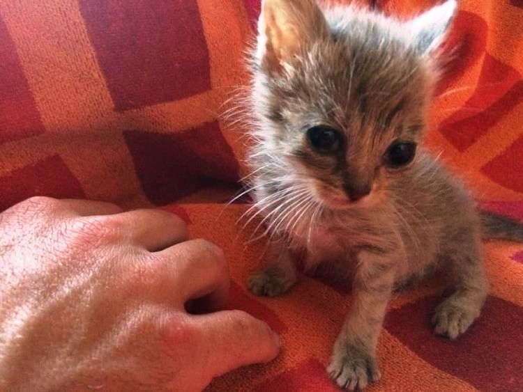 Ants Were Crawling And Biting His Skin And It Could Barely Keep His Eyes Open Family Pet Kitten Pets
