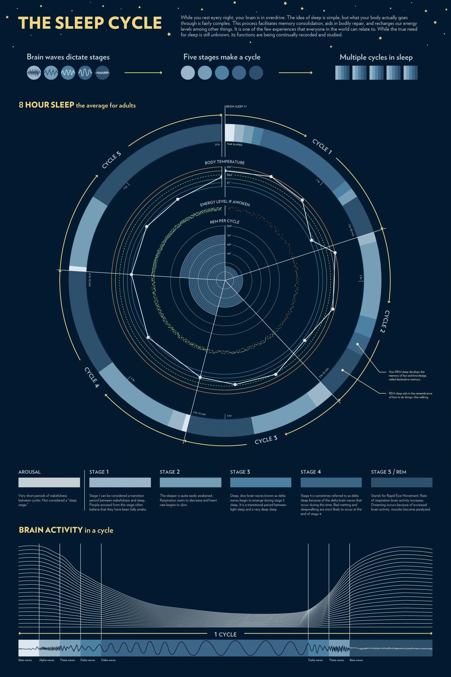 the sleep cycle infographic