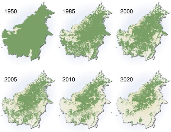 Maps of deforestation in Borneo from 1950 to present, and ... Deforestation Map on