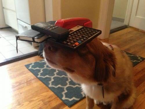 ¿quién necesita secretaria con este ayudante? . Más #humor en www.lasfotosmasgraciosas.com