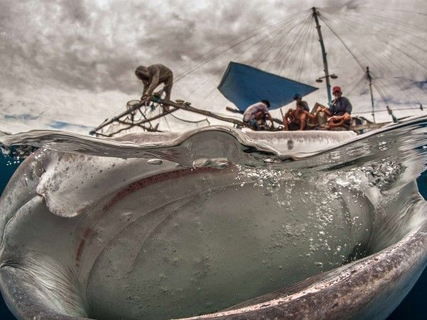 Fotógrafo de vida silvestre del año 2014 (© Adriana Basques)