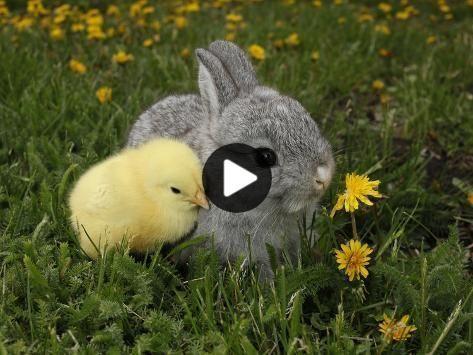 #cutestanimals #animalsart