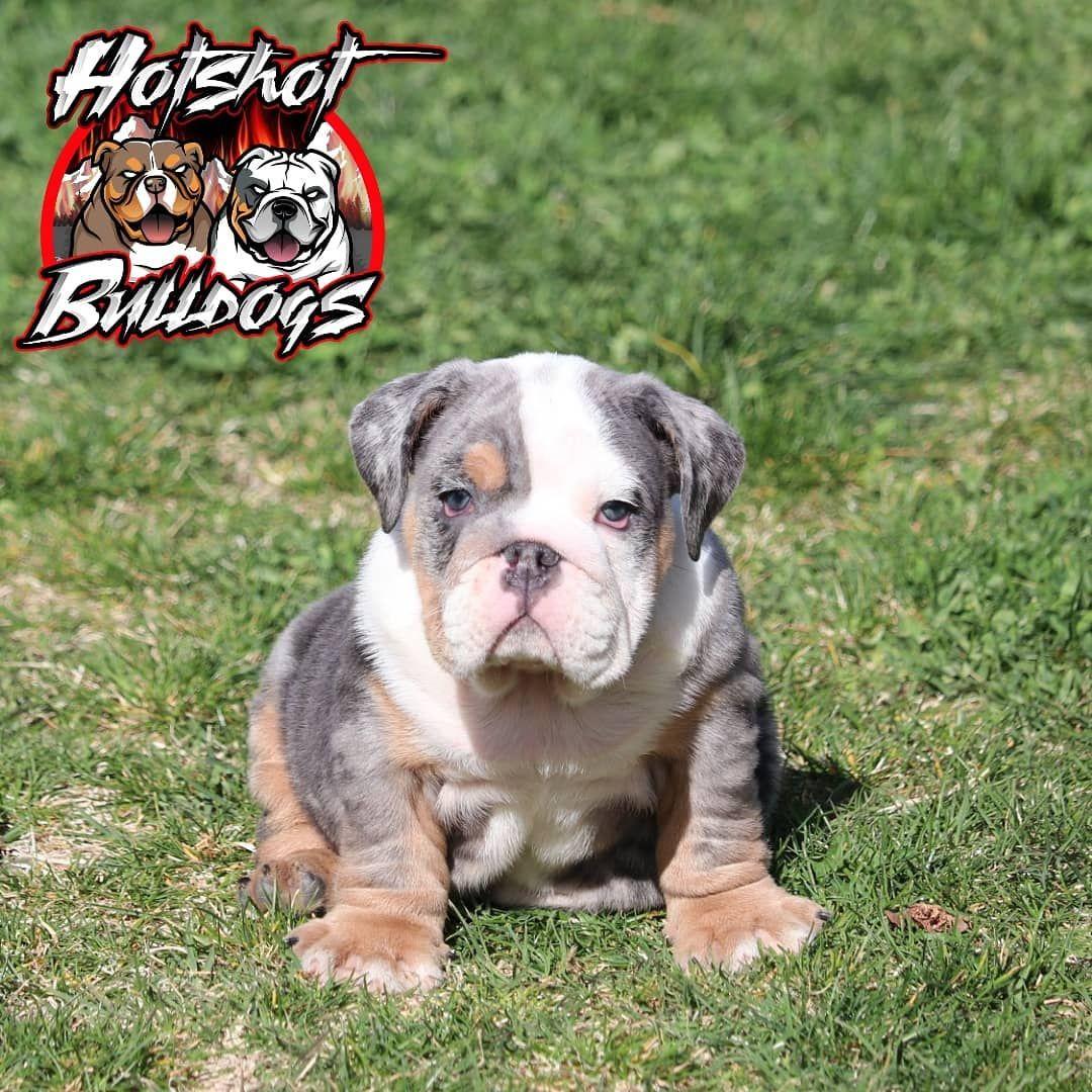 Hotshot Bulldogs On Instagram Hotshot Bulldogs Chief Will Be