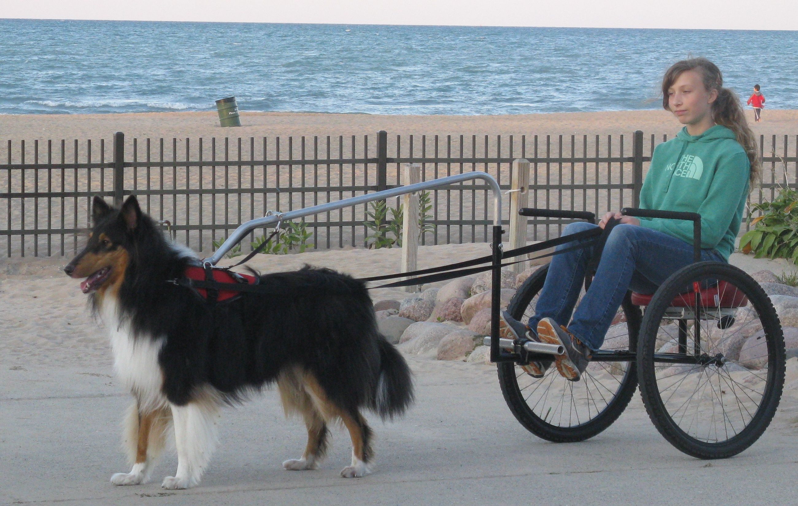Dog Carting By Beach Jpg 2601 1650 Dogs Cool Pets Dog Sledding