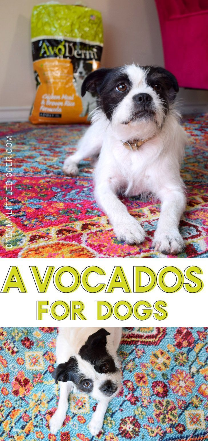 Avocados for dogs avoderm dog food dream a little