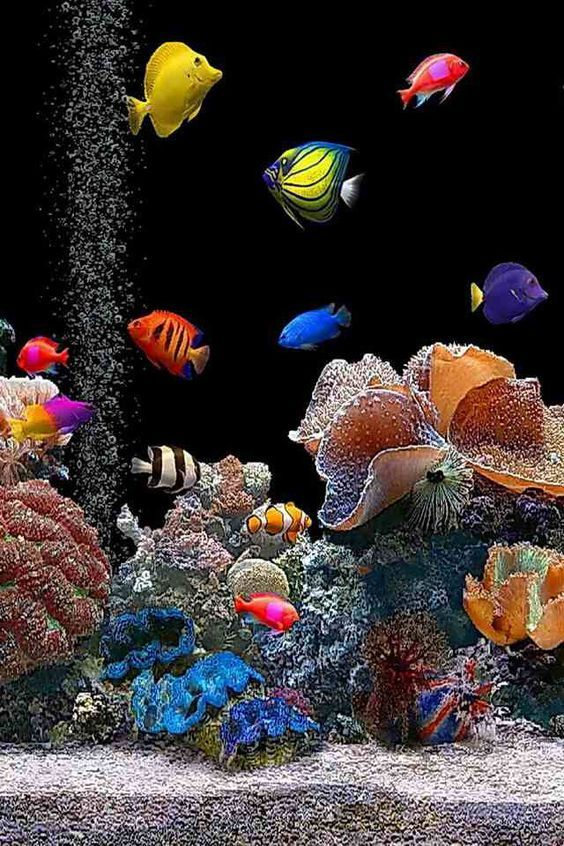 Salt Water Fish Tank Marine Fish Tanks Beautiful Fish Salt Water Fish