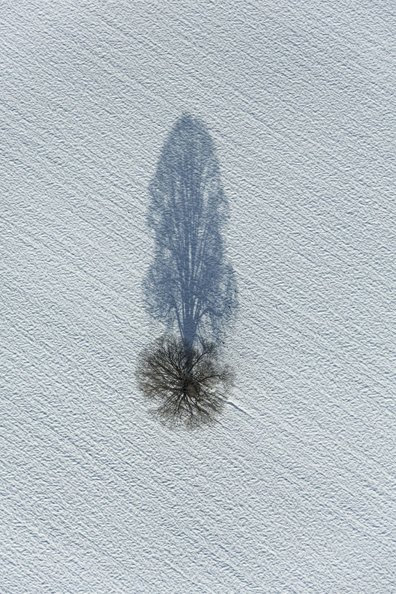 "0rient-express: "" Shadow Tree 