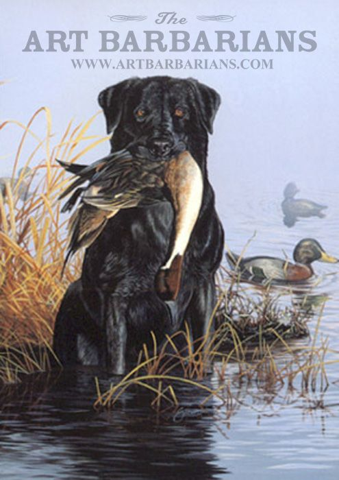 Pintail Duck And Black Lab Wildlife Art Hunting Art Labrador Art