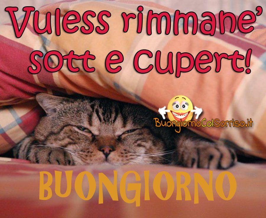 Immagini Napoletane Buongiorno Gattino Sotto Le Coperte