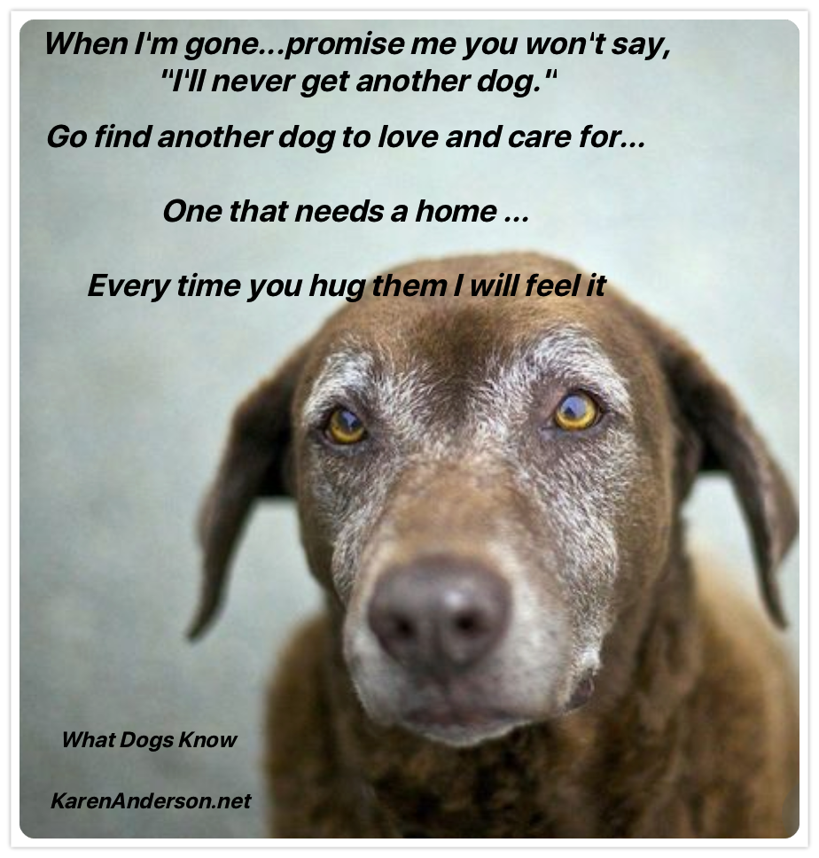 When I M Gone Dog Poems Dog Quotes Miss My Dog