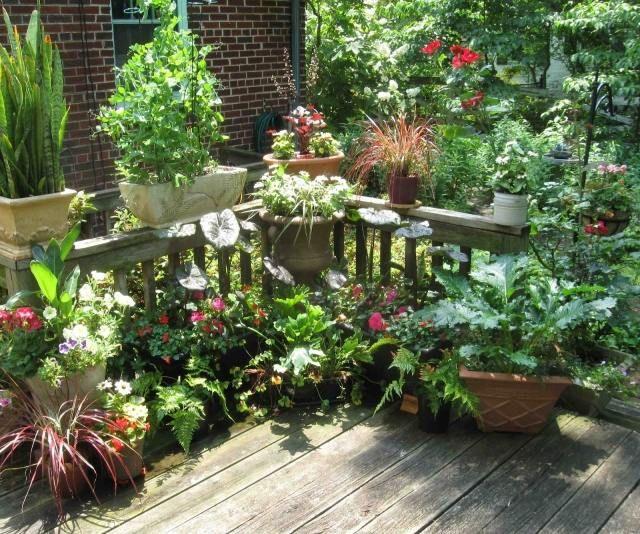 Hinterhof n tzliche ideen topf gefass richtige pflege for Pflanzengestaltung garten