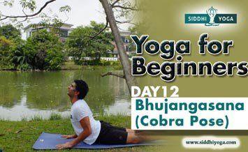 bhujangasana cobra pose benefits how to do