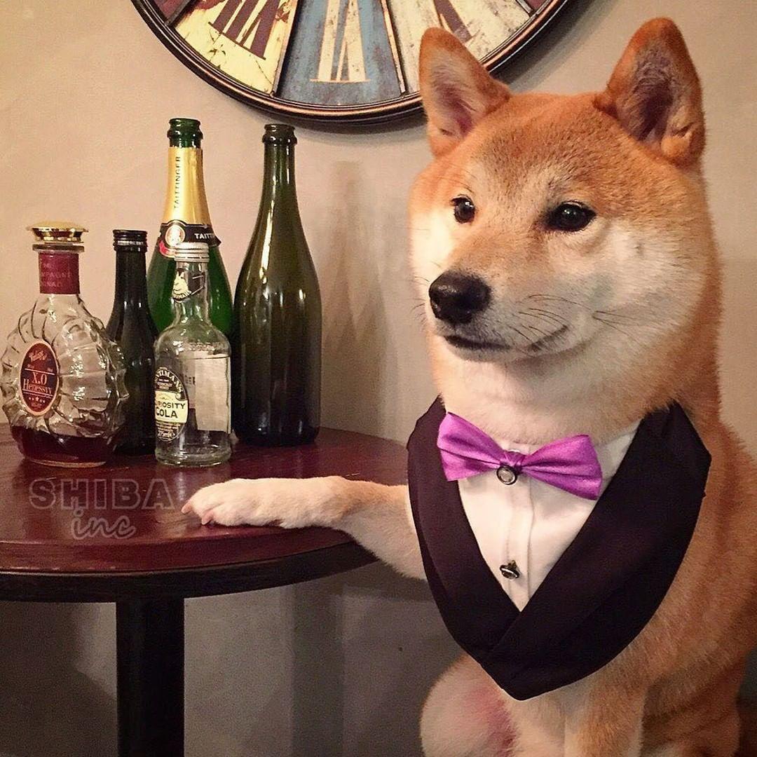 Les scientifiques ont découvert pourquoi «le chien est le