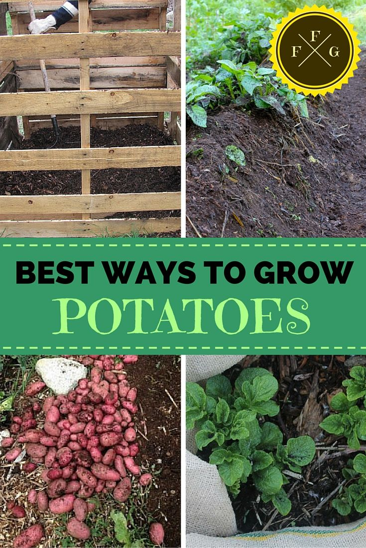 Grow Potatoes For More Yields