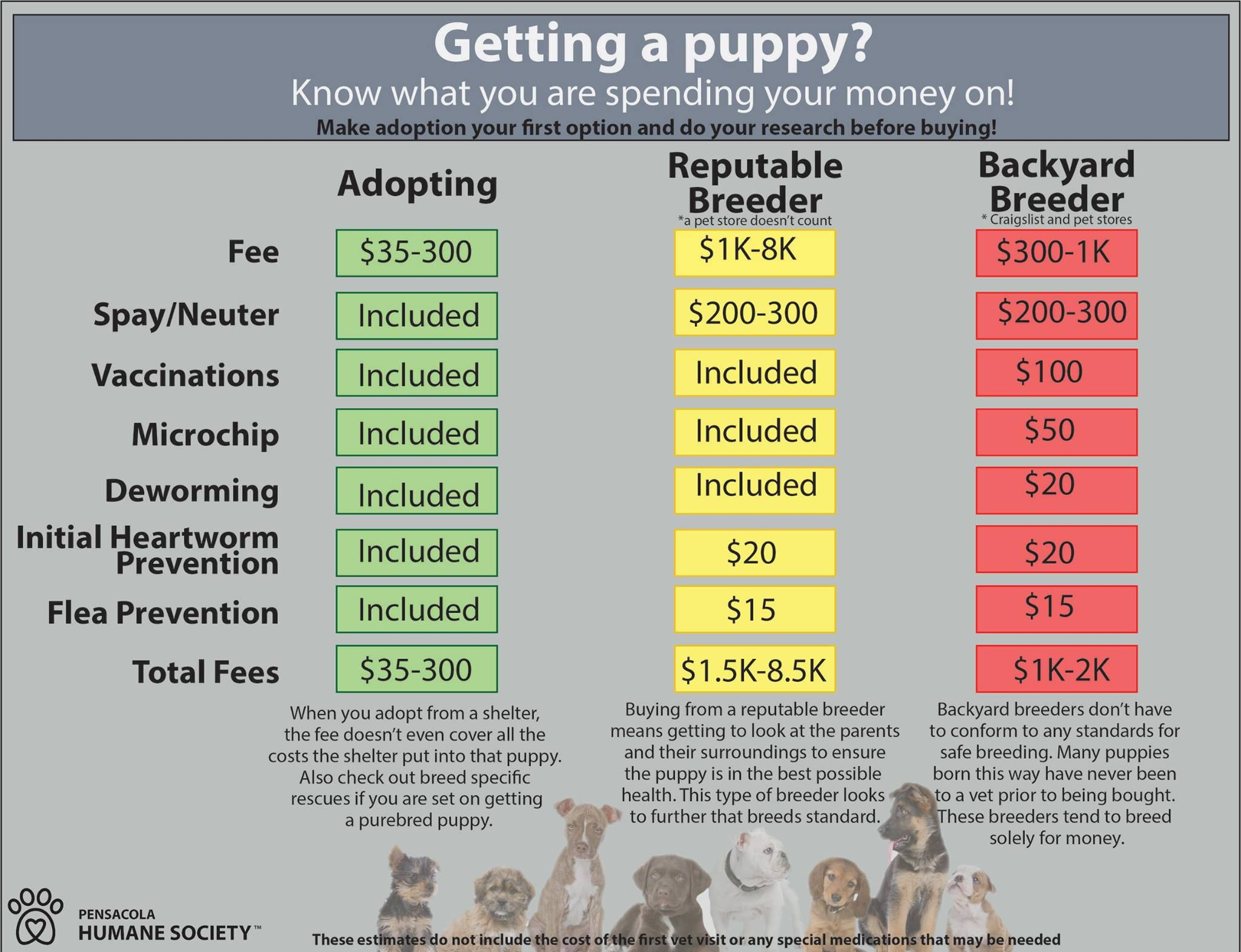 Shelter Adoption vs. Breeder Buying Getting a puppy