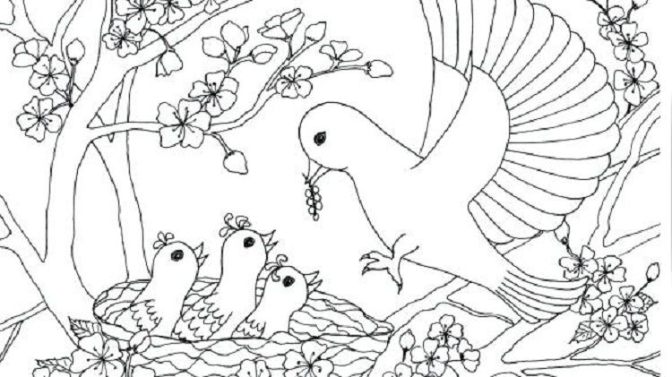Doctor Bird Coloring Page