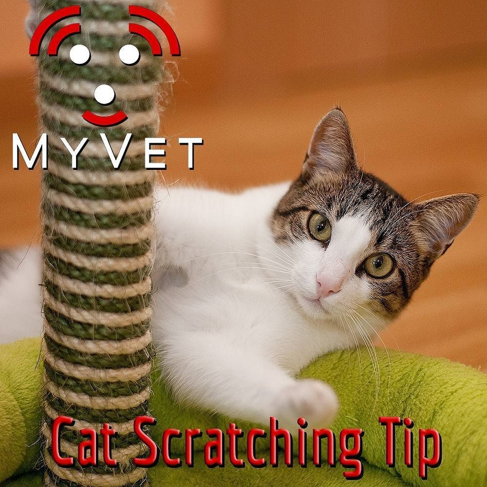 Scratching posts are a great outlet for your cat's excess