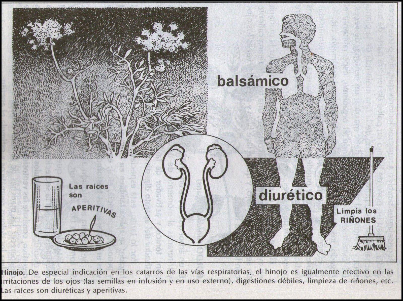 La Naturaleza como Medicina: Cura de hinojo