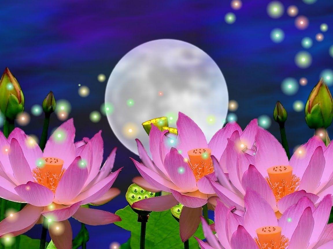 Flowers: Magical Time Night Magic Moon Wallpaper Flower ...