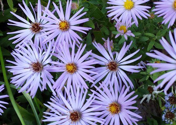 Outdoor Living Ideas The Home Depot Heat Tolerant Flowers Heat Tolerant Plants Beautiful Gardens